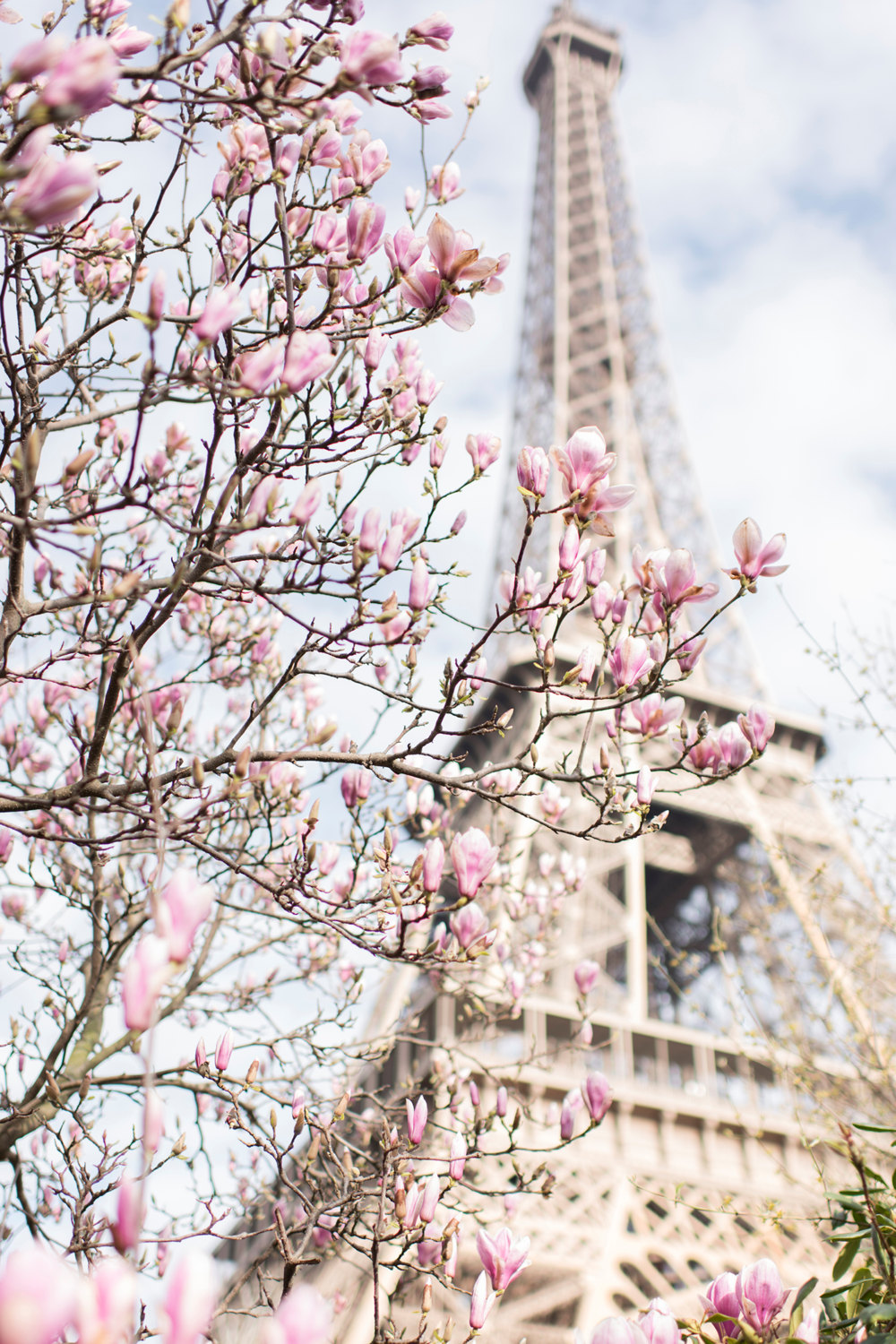Eiffel Tower with magnolias