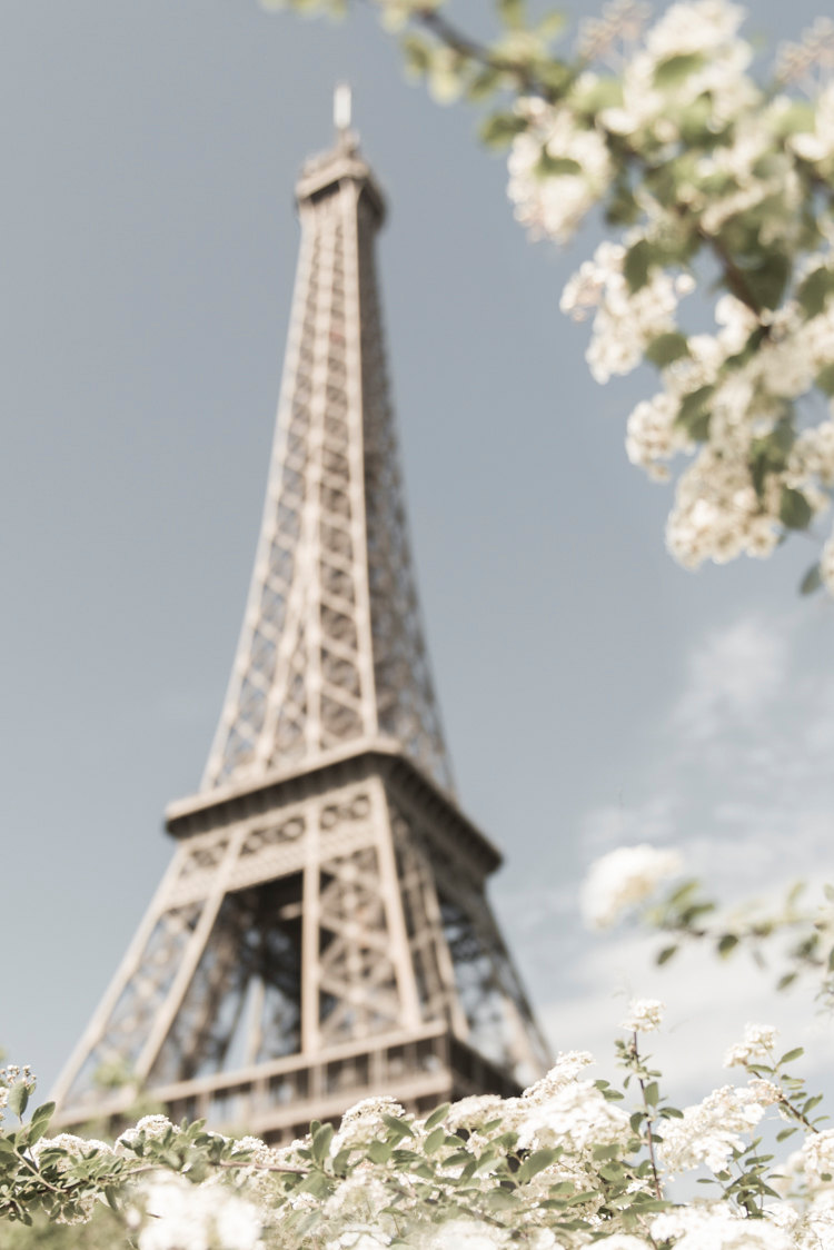 White Blossoms at the Eiffel Tower