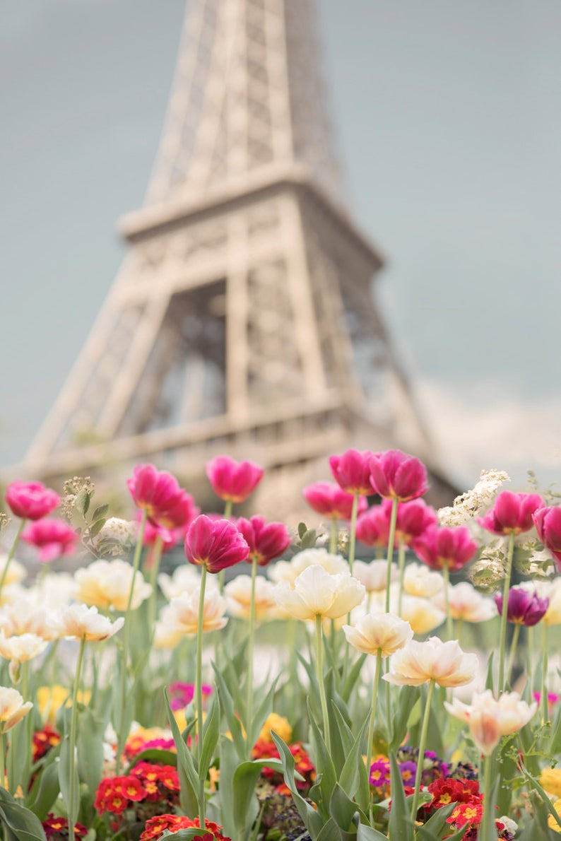 Tulips at the Eiffel Tower