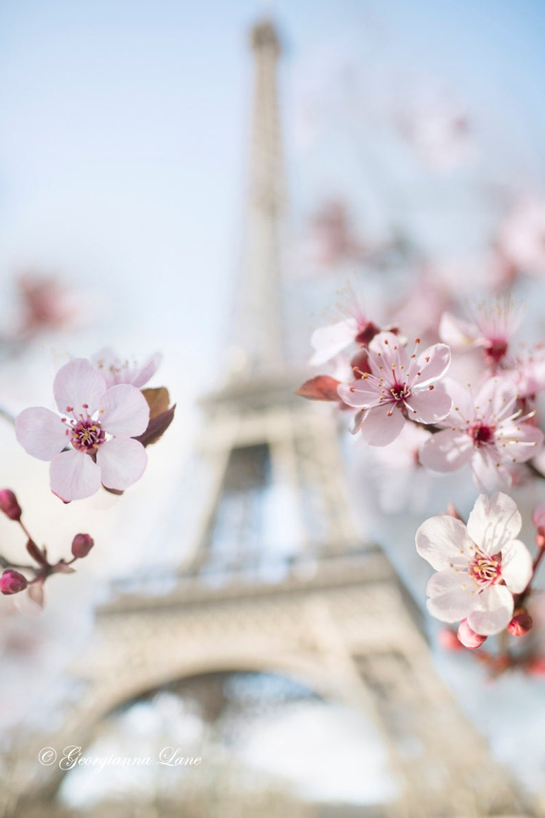 Eiffel Tower with Plum Blossoms