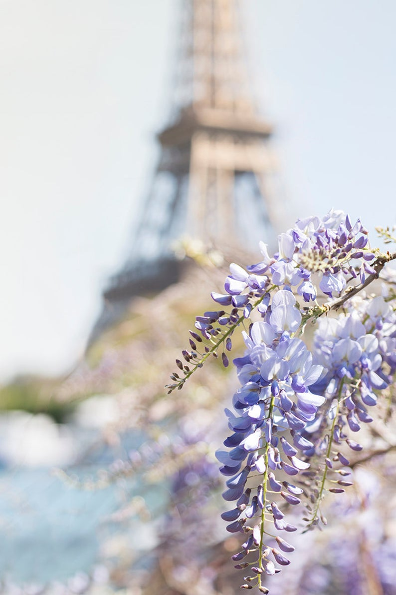 Eiffel Tower with Wisteria Blossoms