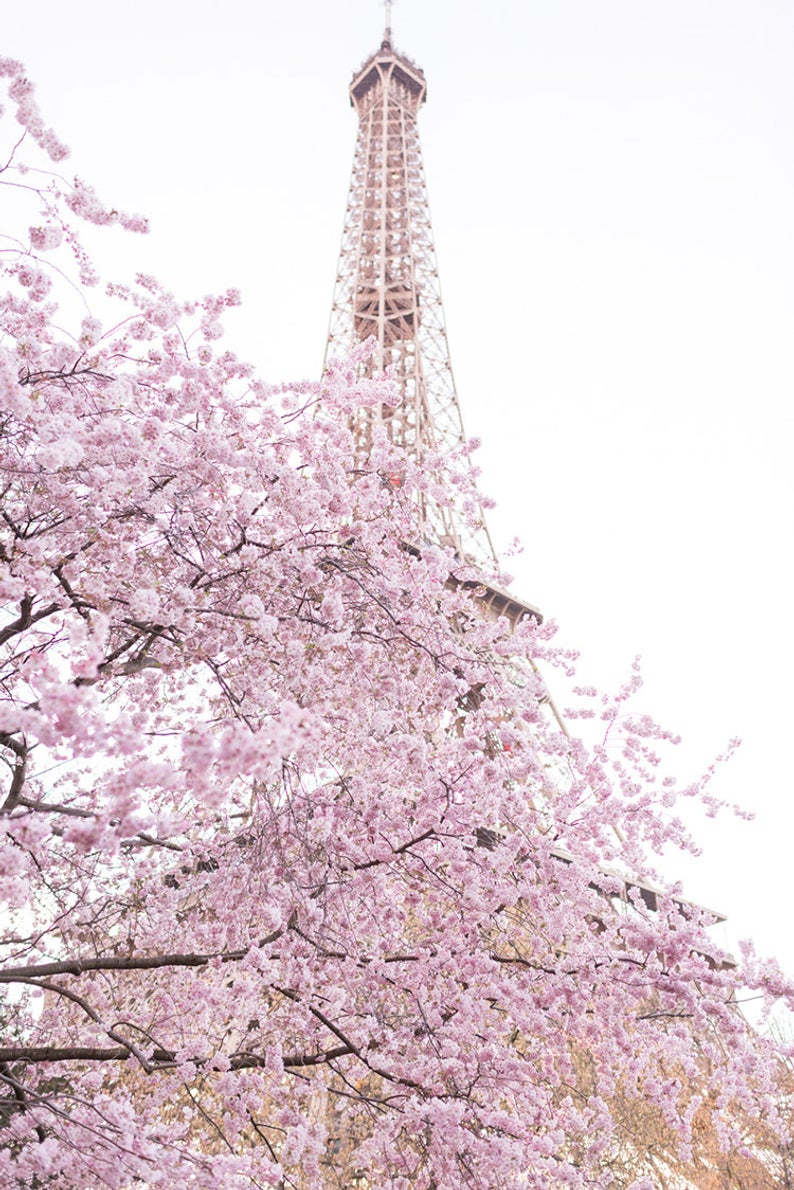 Early Cherry Blossoms at the Eiffel Tower
