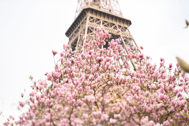 Early Magnolias at the Eiffel Tower