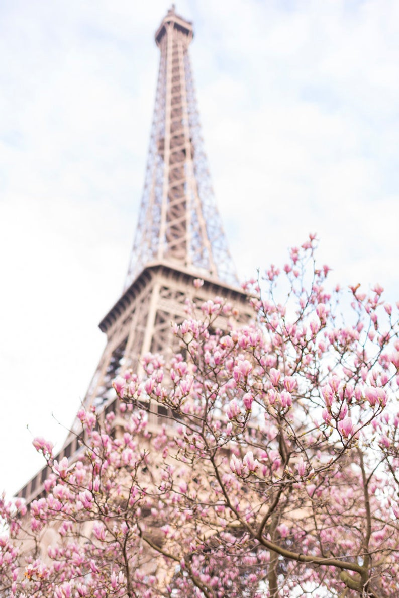 Magnolias at the Eiffel Tower