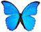 janna-butterfly