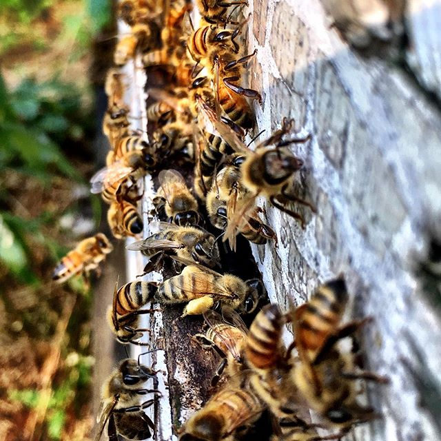 Some of our wonderful work colleagues! #honeybee #hardwork