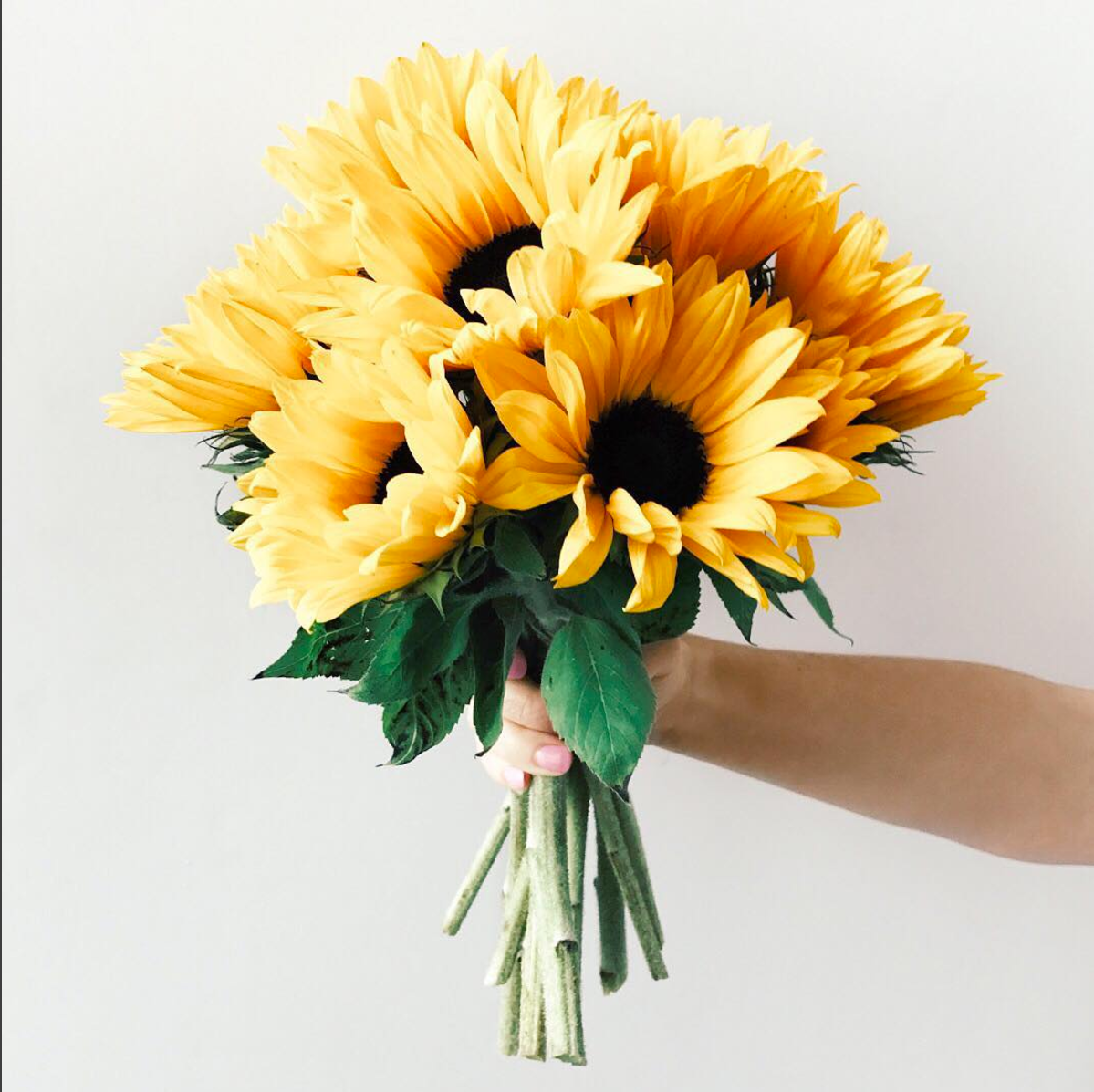 Your daily dose of happiness. 🌻