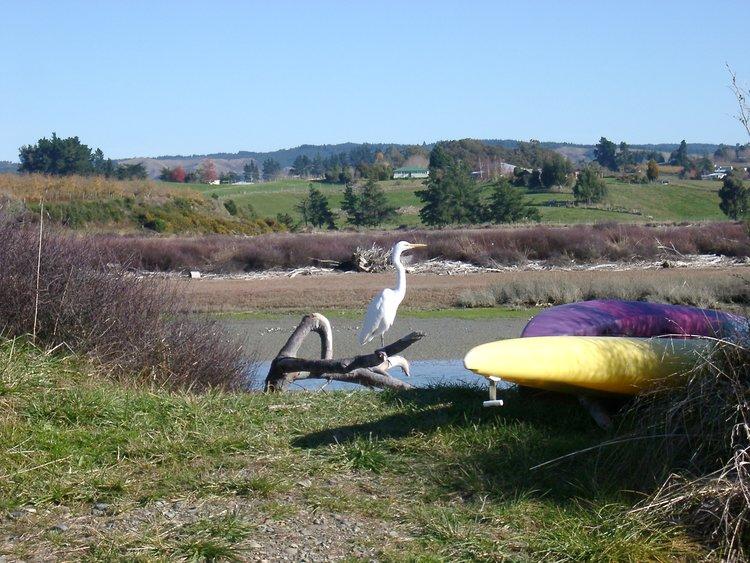 Heron on the estuary
