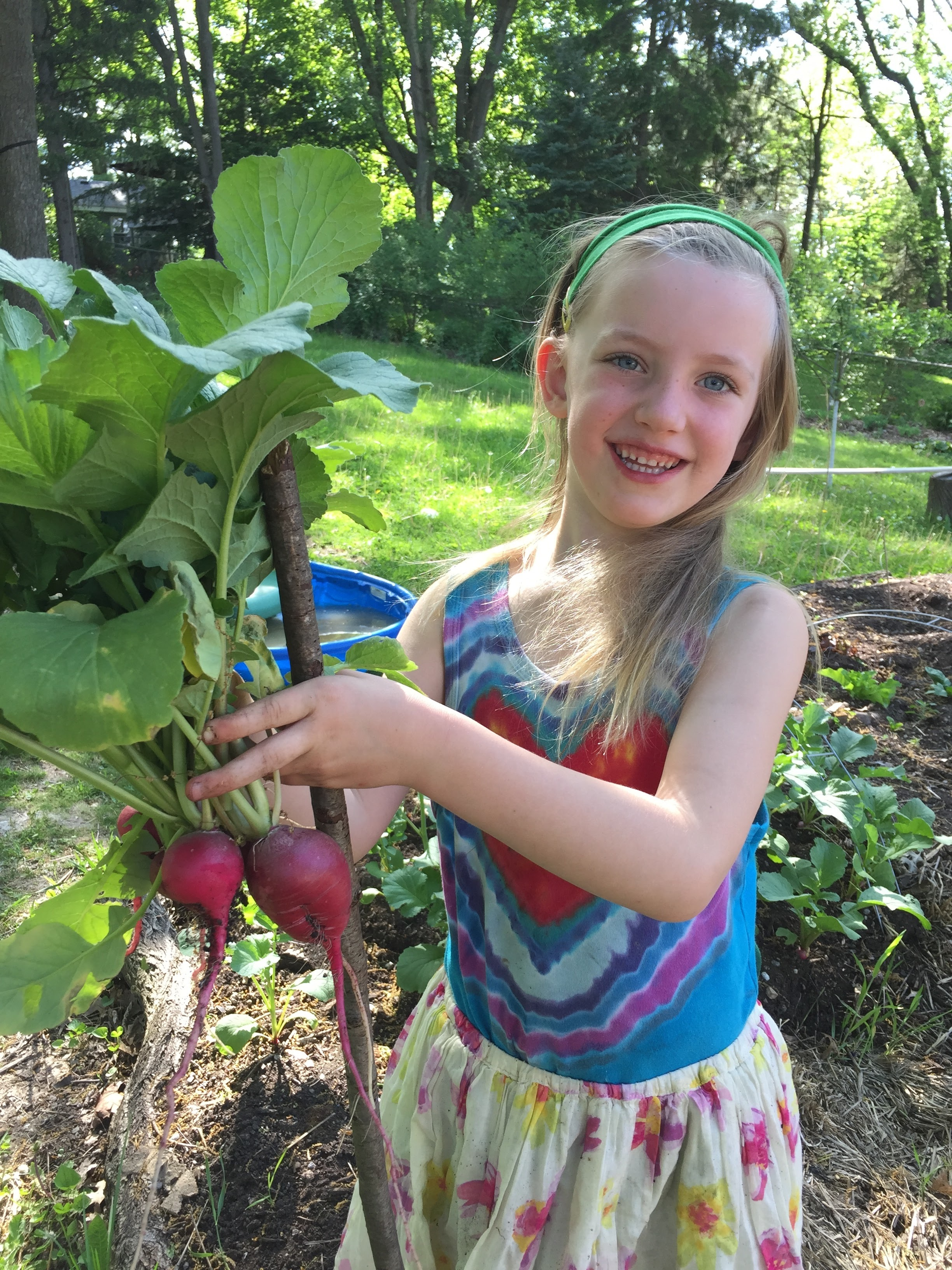 Five year old smiles when she's harvesting beets for dinner