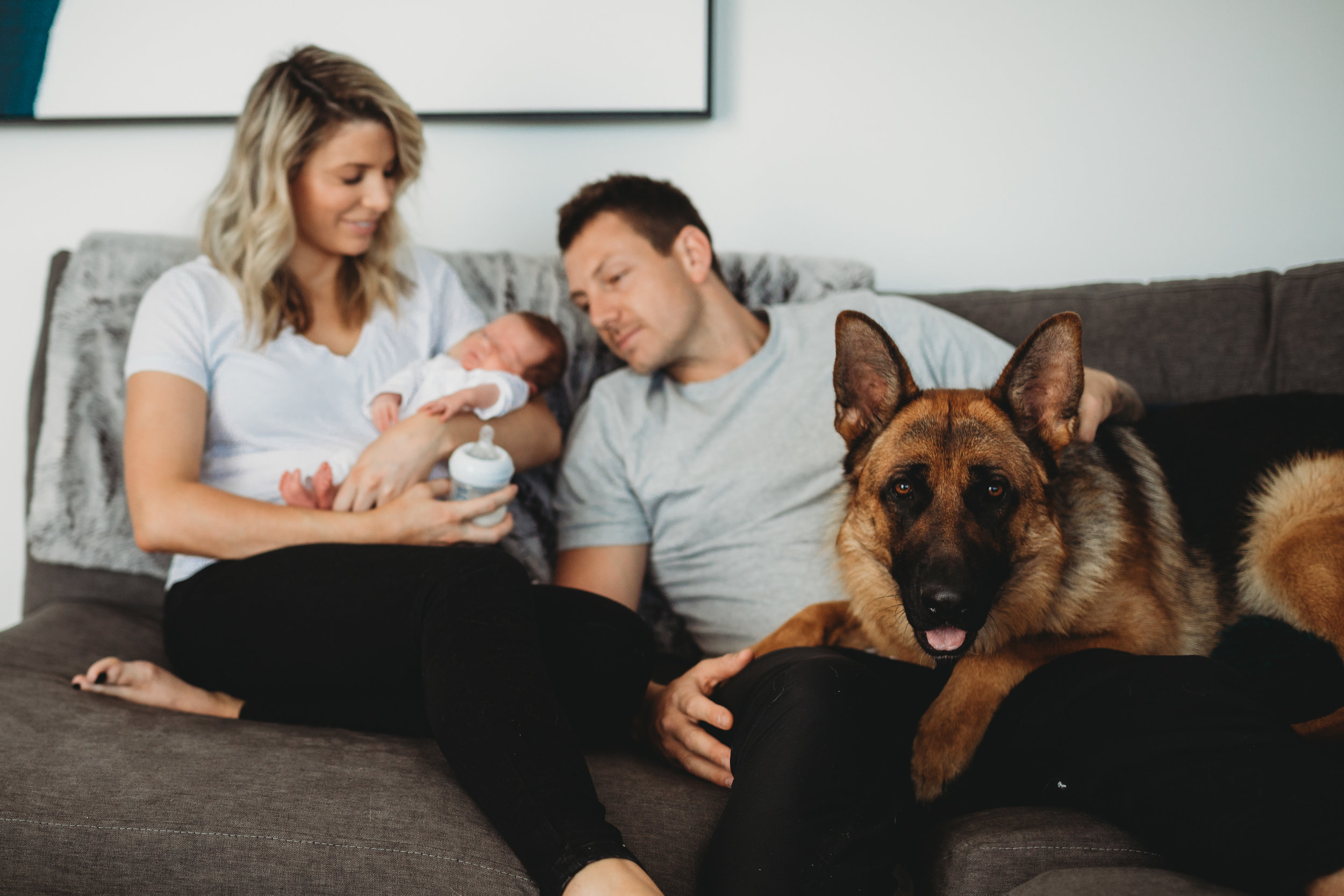 family - pets - melbourne lifestyle newborn photographer