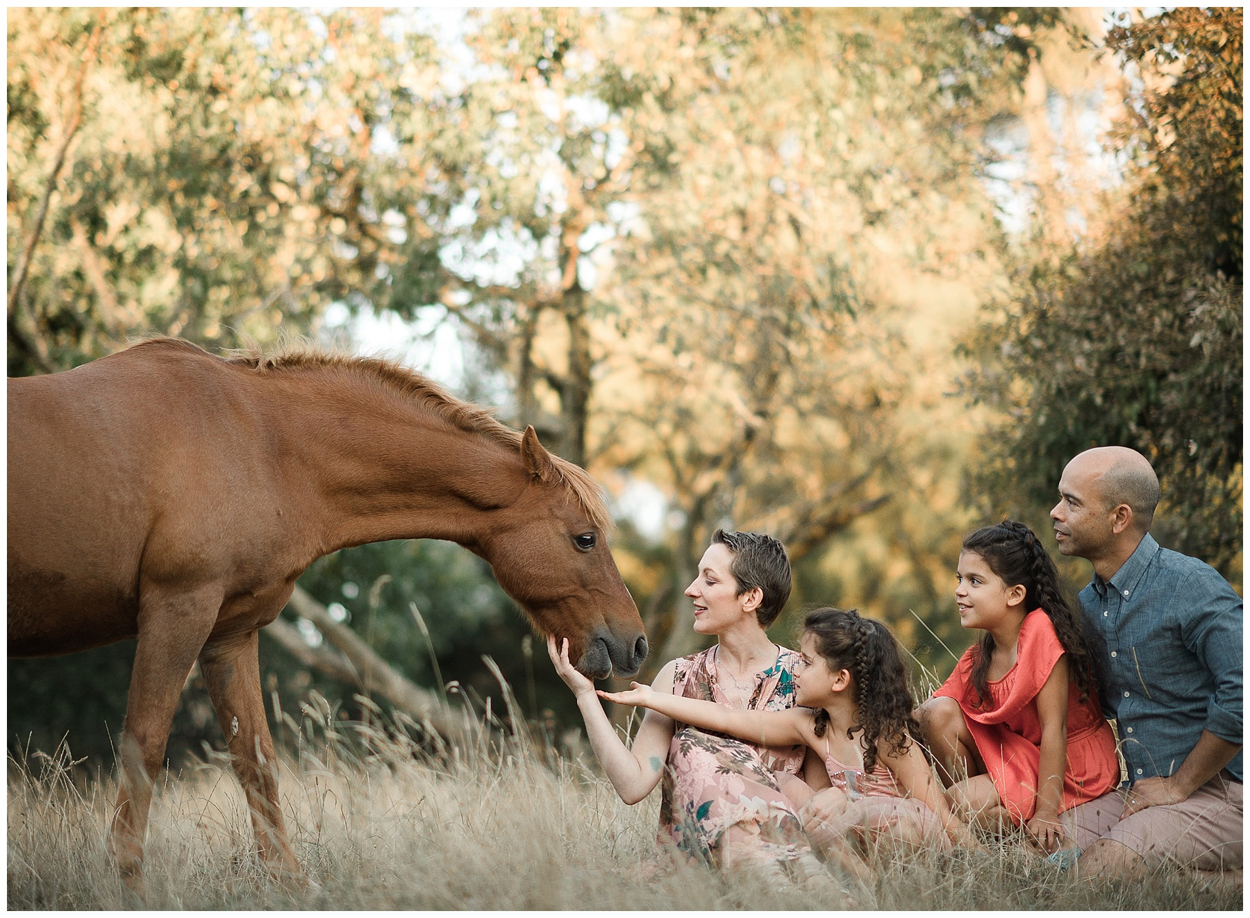 family photography melbourne - pets - horse