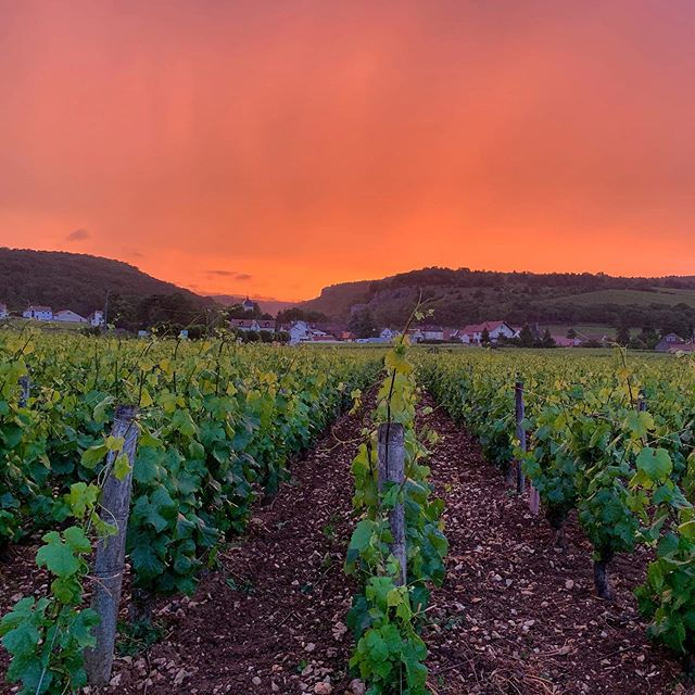 Sunset on Chambolle 😁✌🏻#domainefelettig #felettig #chambollemusigny #chambollemusigny1ercru #lesfeusselottes #wine #winelover #winelovers #vine #vineyard #burgundy #frenchwine #frenchwines #sunrise #sunrisers #beautifulsky #nature
