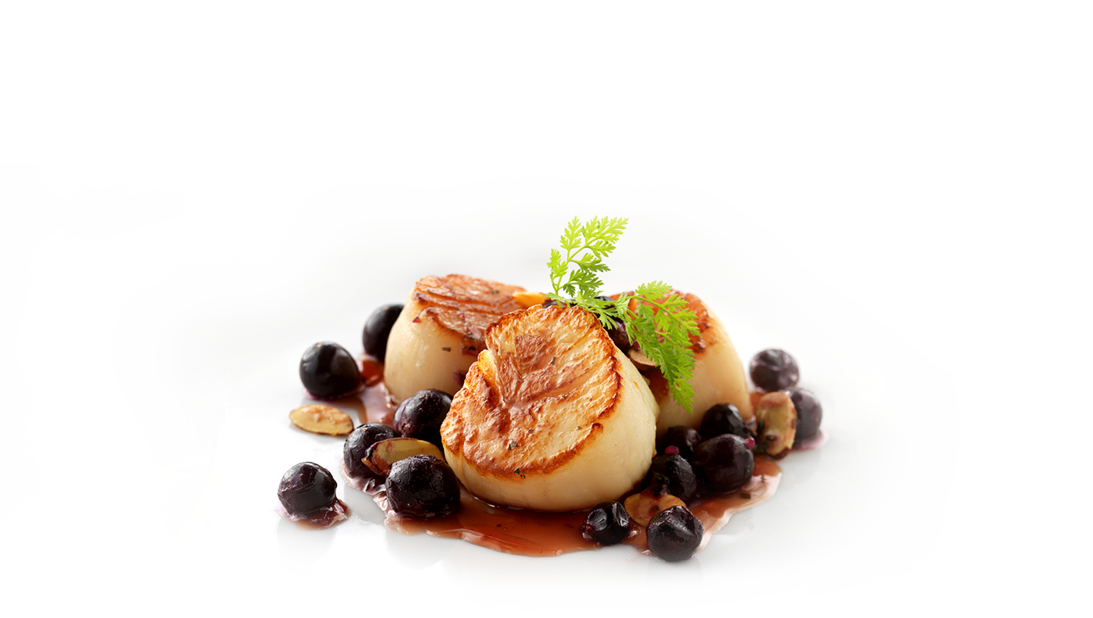 Scallops-BGImage_NEW.png
