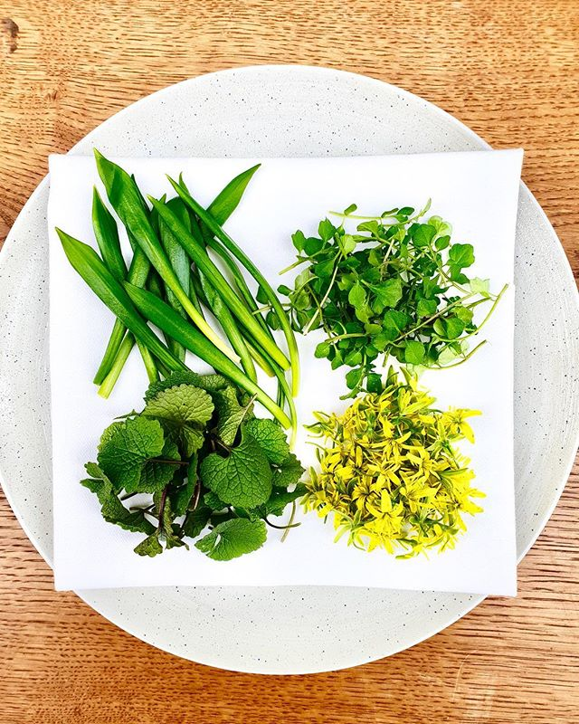 @martinolsensen our Head Chef went for a little walk this morning, and picked this beautiful selection of wild herbs for the menu tonight 🙌🏼 from left to right: Wild garlic/ramson, bittercress,  yellow star-of-Bethlehem & garlic mustard #spring #colorsofspring #wildfood #wildherbs #eatwhatyoufind #foraging #gourmet #onthemenu #bibgourmand #michelin #fromfieldtotable