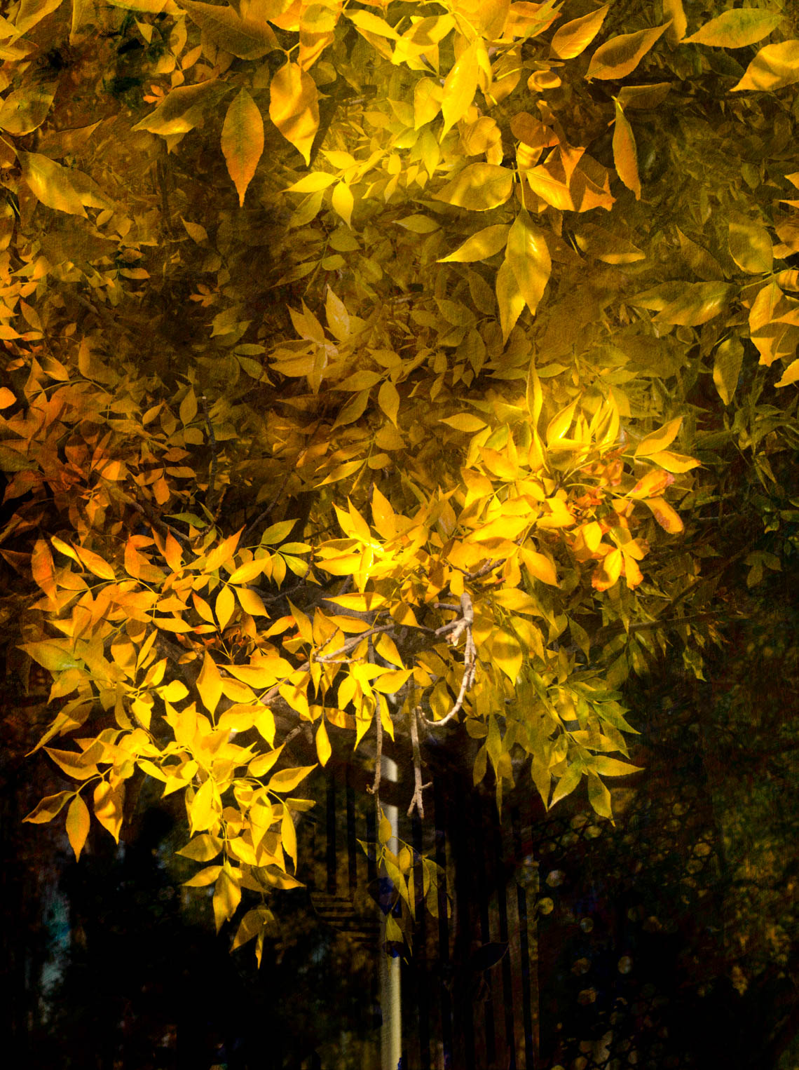 Tree with Yellow Leaves, 2017