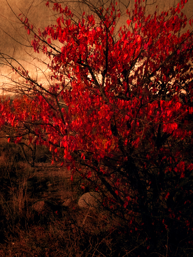 The Red Tree, 2011