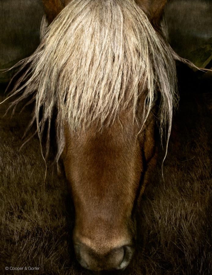 Portrait of a Horse, 2008