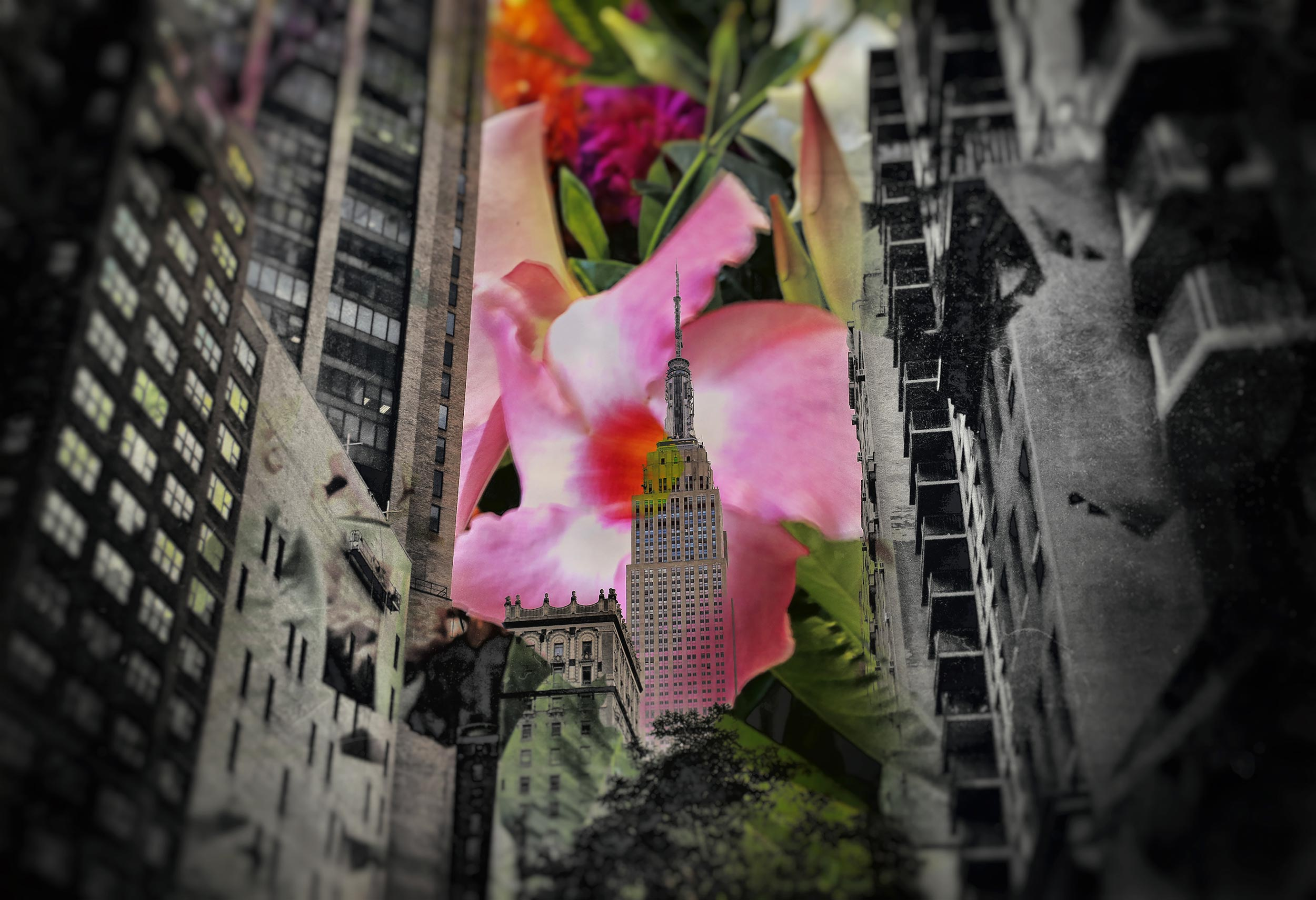 Lead-me-to-your-door-Tonal-Empire-State-and-Flower-1T4A1425.jpg