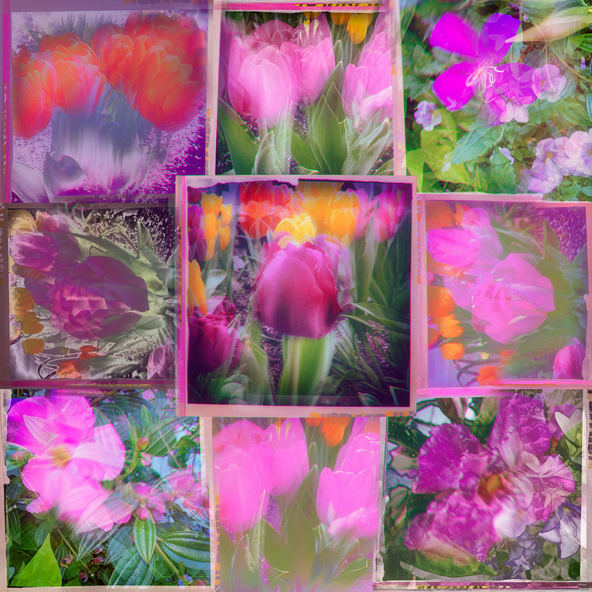 Flower-Collage-Colorized.jpg
