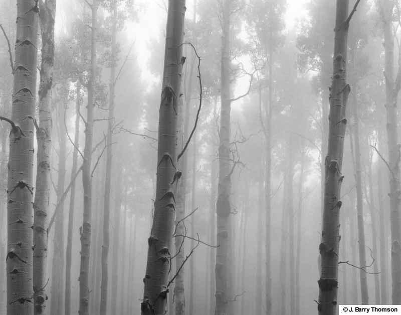 35-Aspens_in_Fog-AZ.jpg