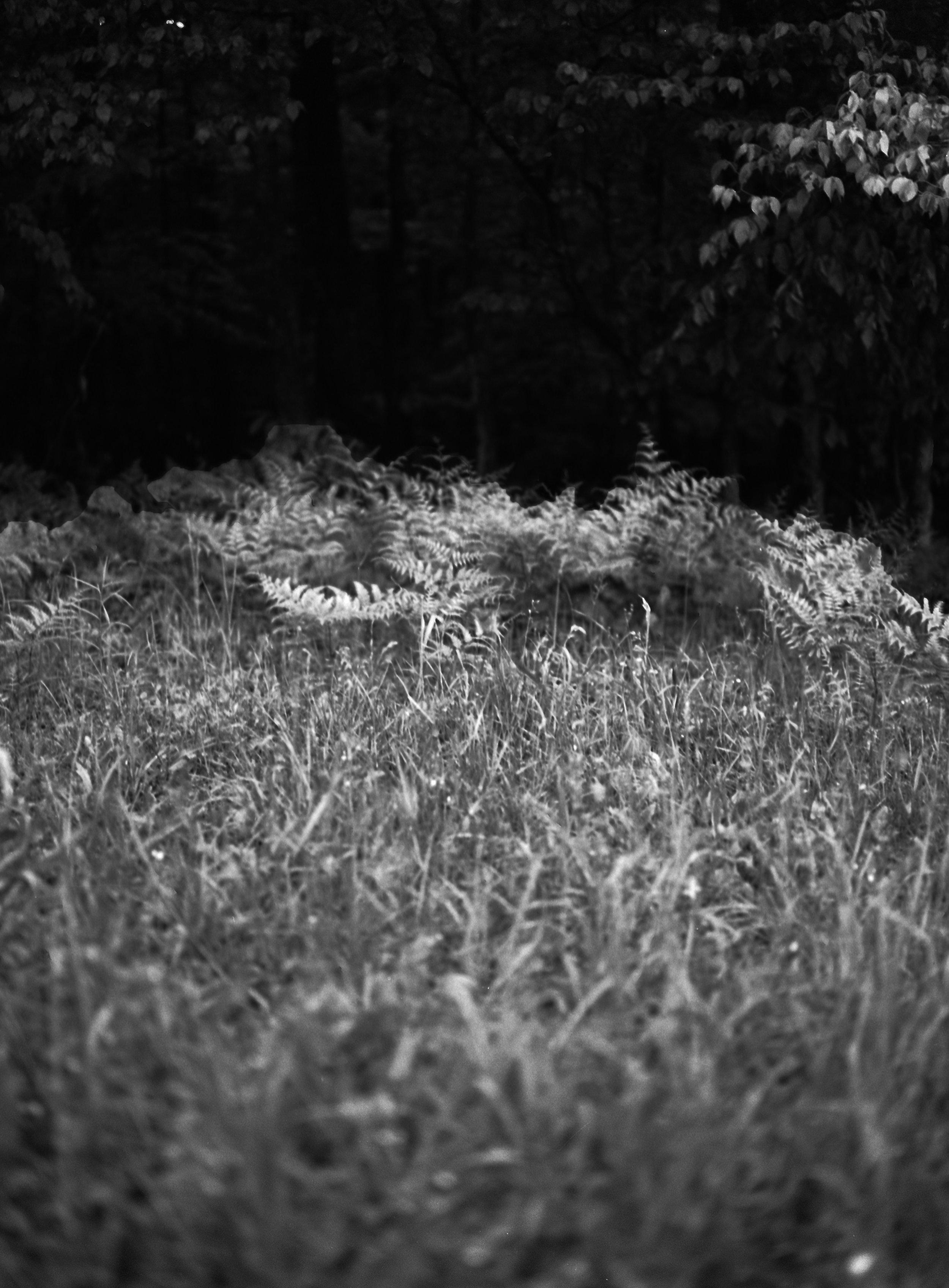 03_Woods.jpg