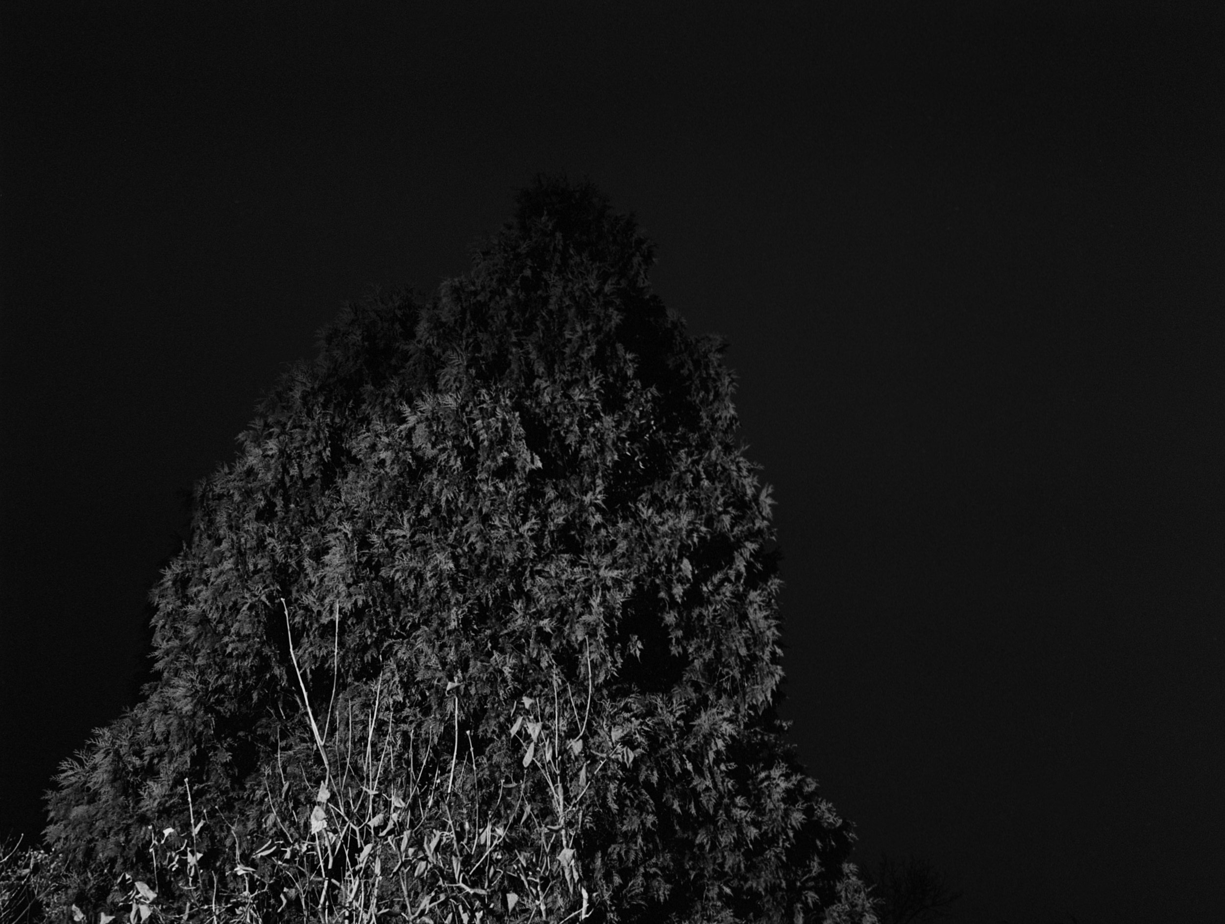 12_Night Tree.jpg