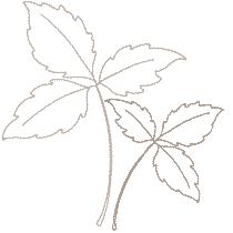 Medium_leaves_8.png