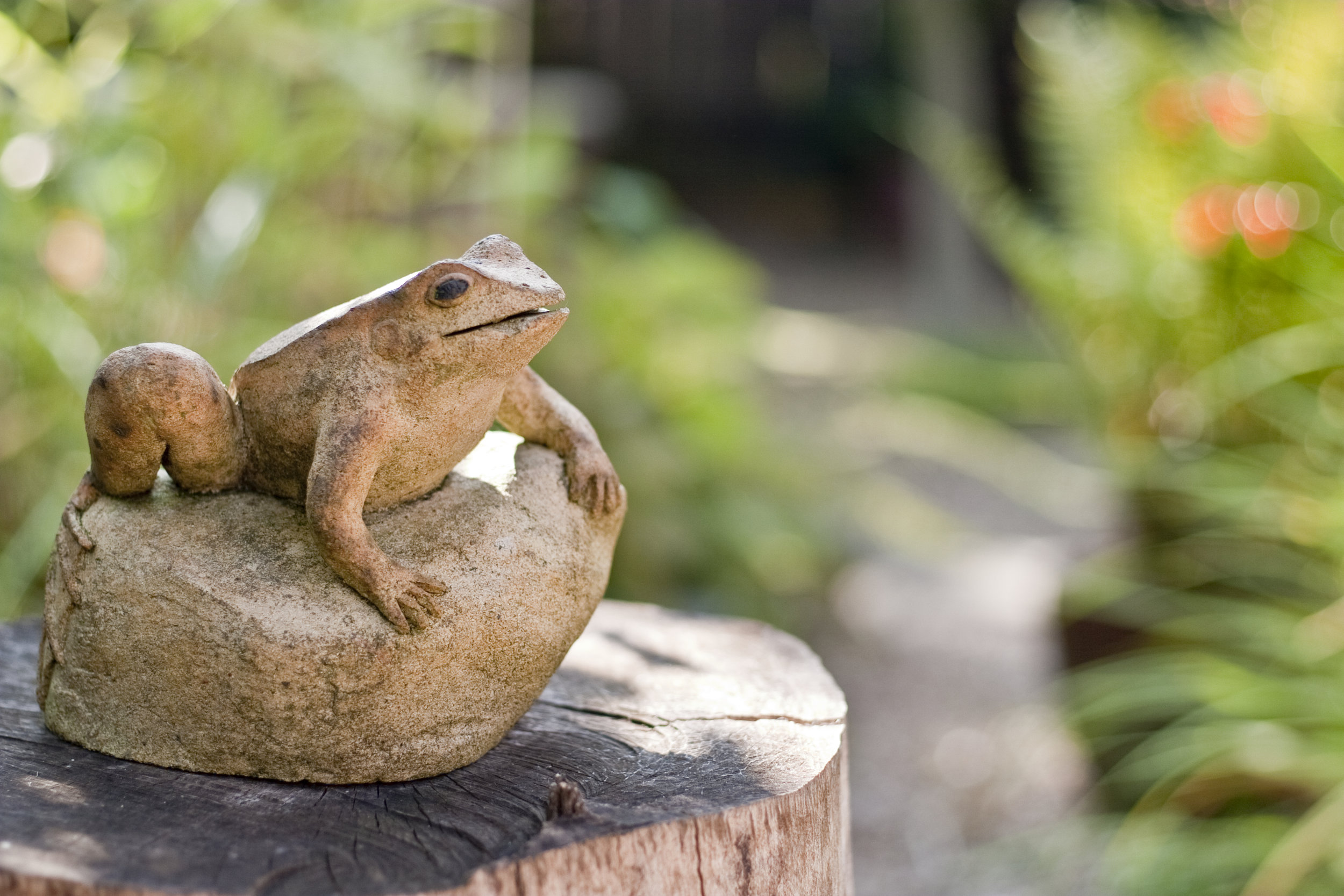 Photo of stone ornamental frog on top of log
