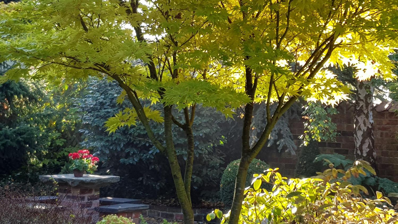 Dappled light through autumn leaves in the Tranquil Garden.