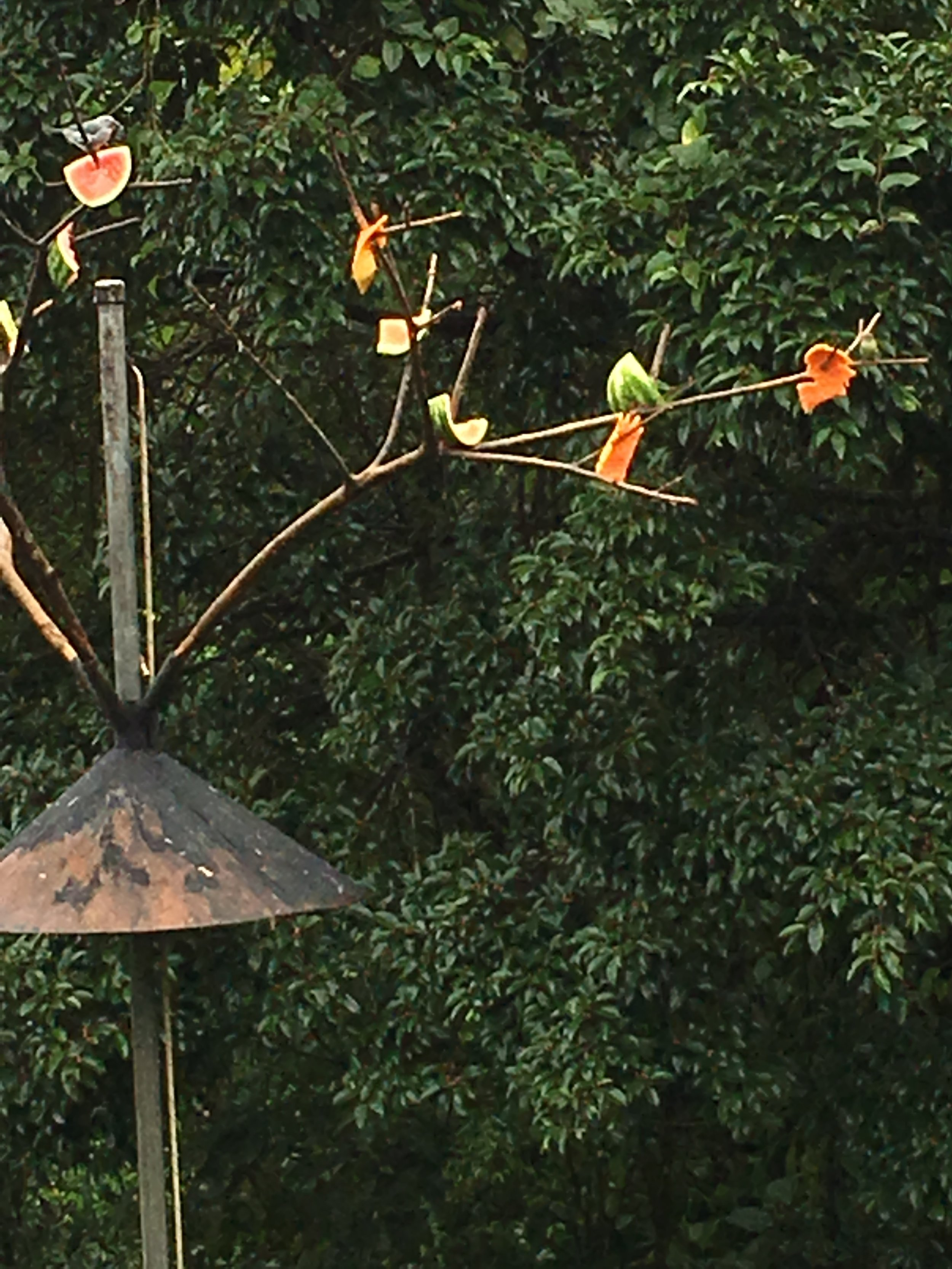 Bird nesting area outside Arenal Lodge deck