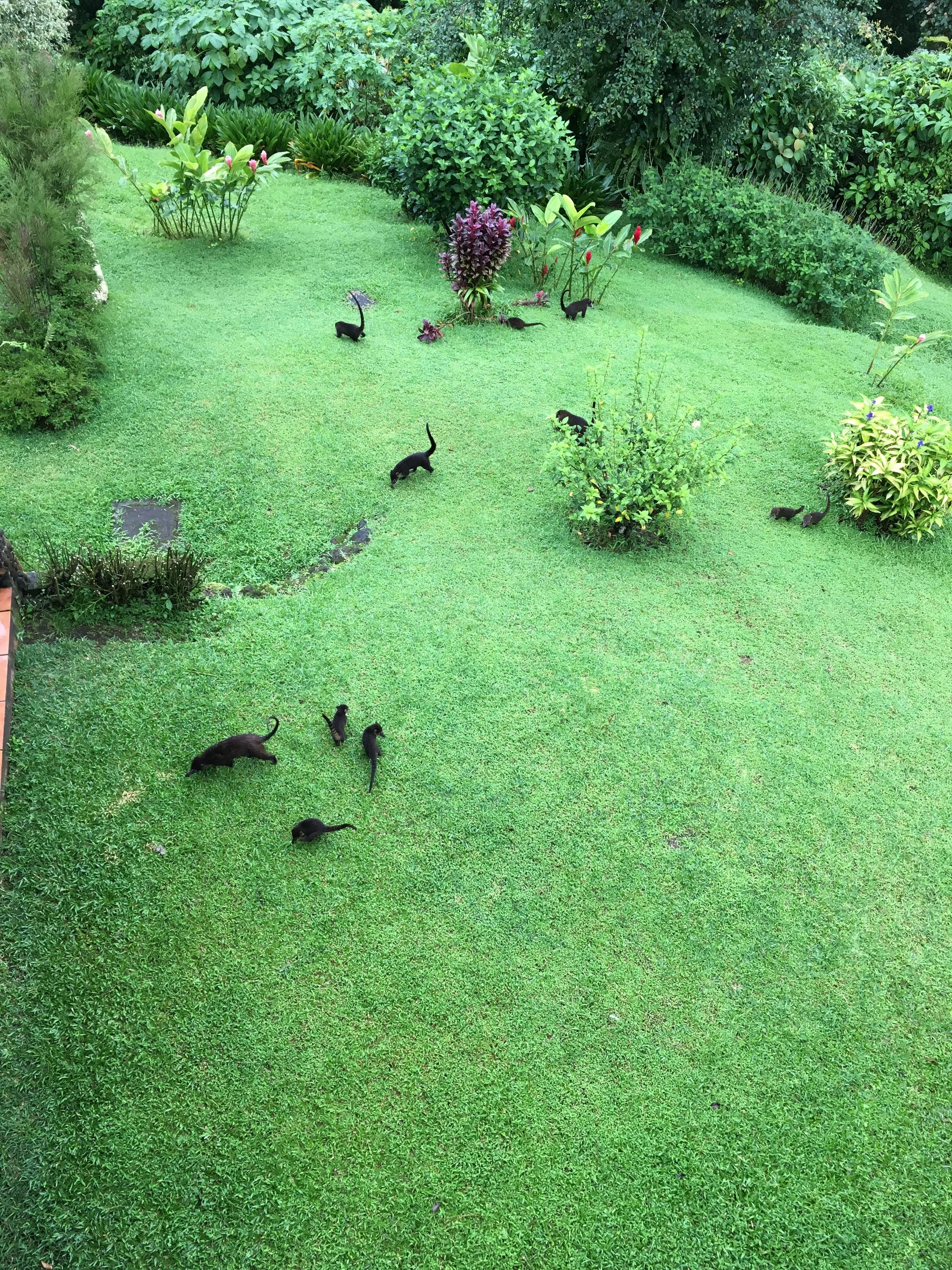 Animals outside our Arenal Junior Suite patio