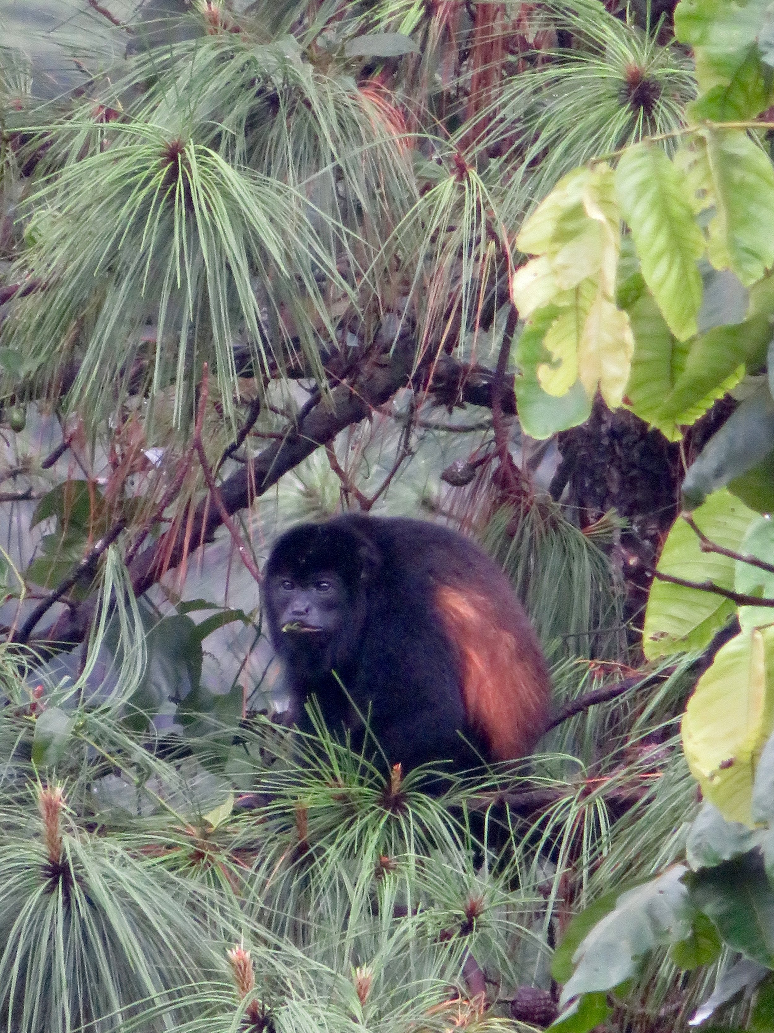 Monkeys playing outside our Arenal Lodge suite
