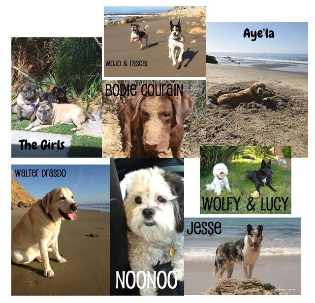dog montage.jpg