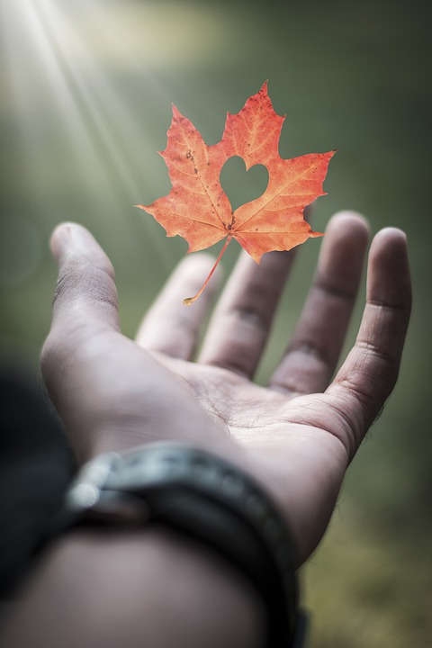 """""""I hope I can be the autumn leaf, who looked at the sky and lived. And when it was time to leave, gracefully it knew life was a gift.""""  -Dodinsky"""