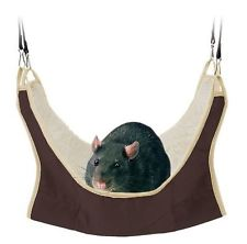 rat hammock.jpg