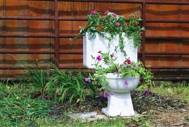 toiletflowers.jpg