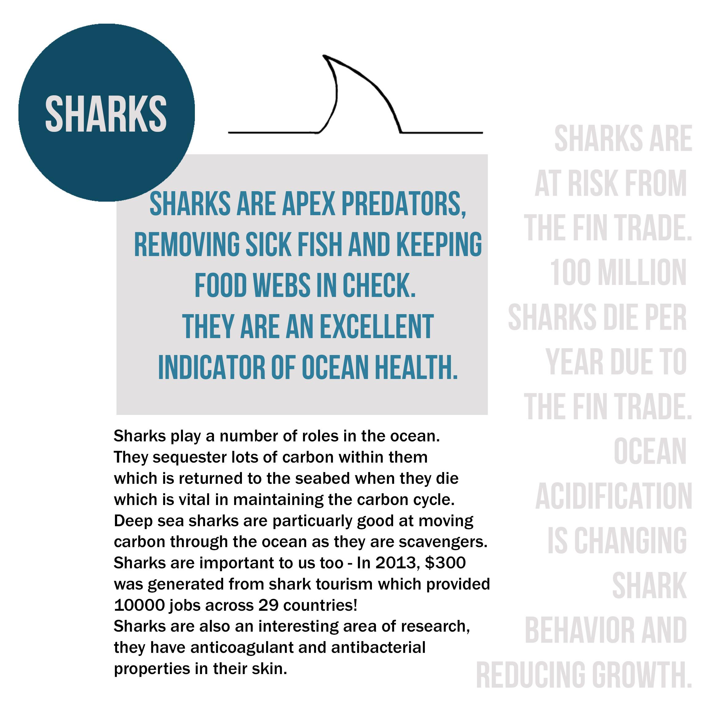 sharks info smartsquid