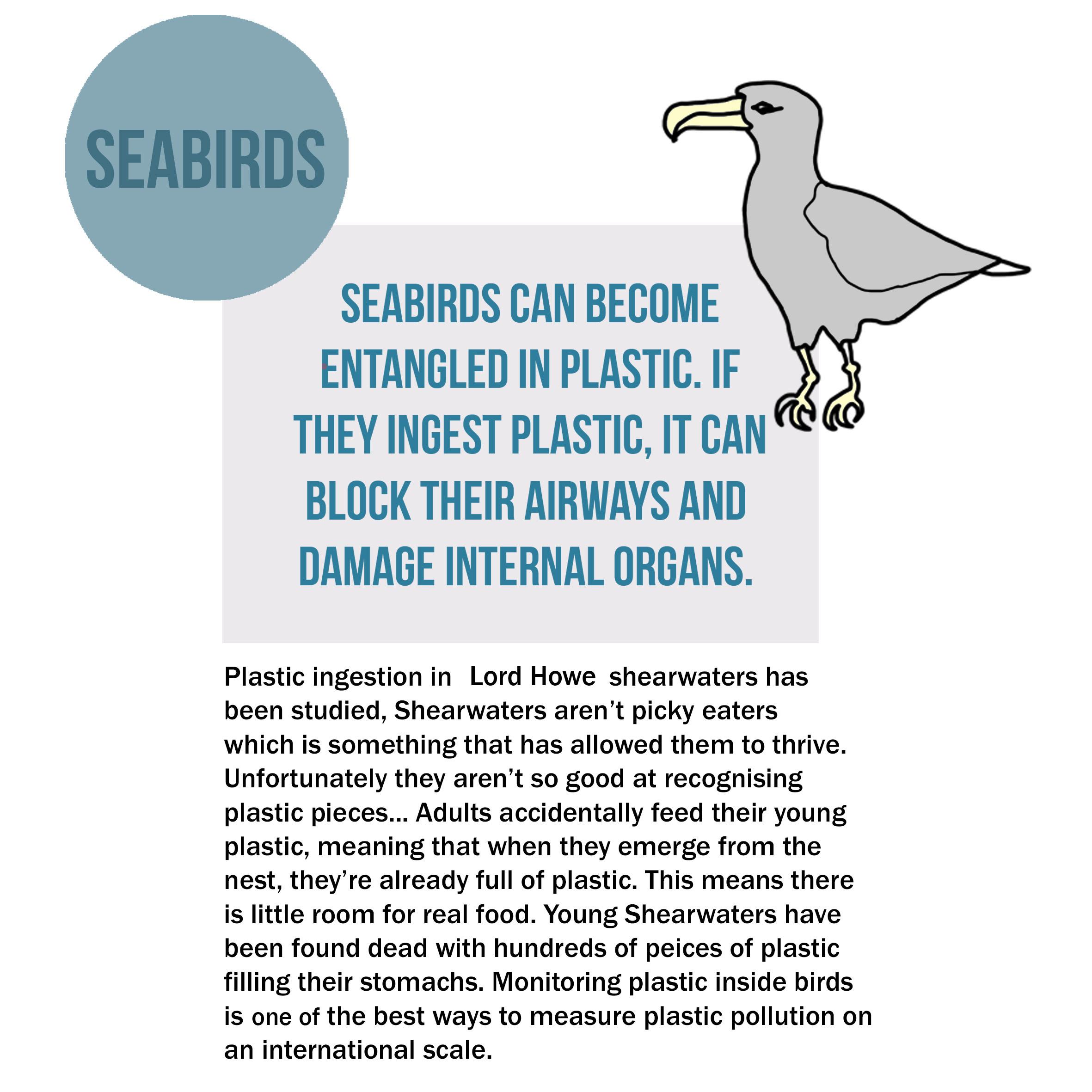 seabirds copy.jpg