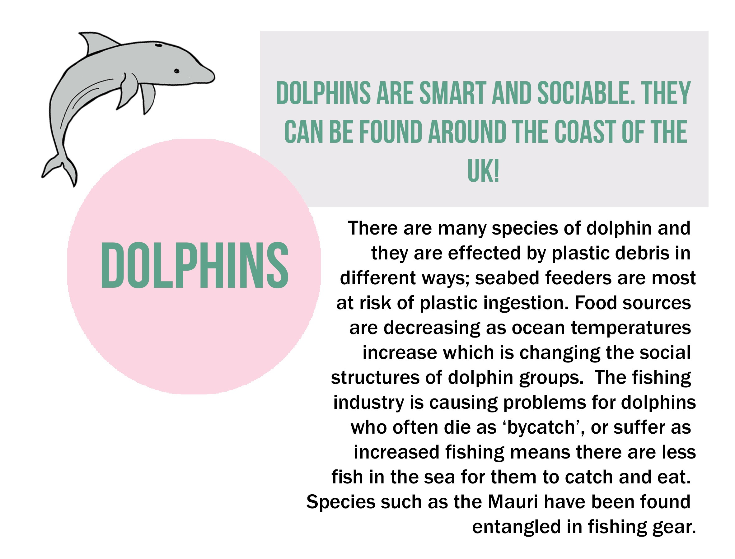 dolphins explained