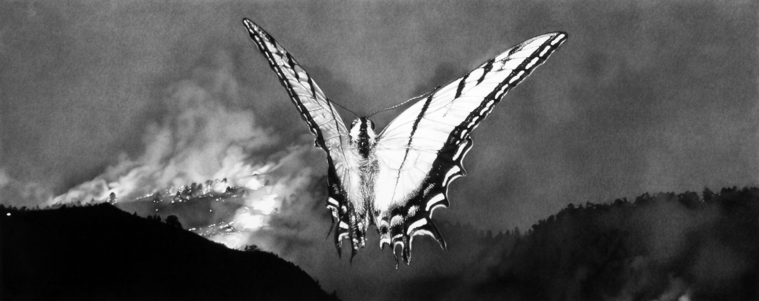 """Chysalis,"" 25 x 56,"" charcoal on paper, SOLD"