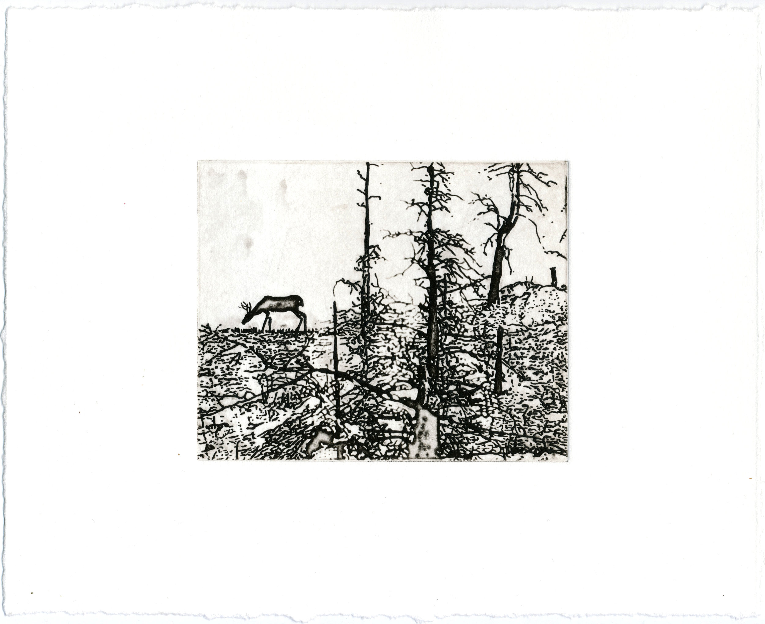 "Charcoal Remnants, 9.5 x 11.5,"" solarplate etching"