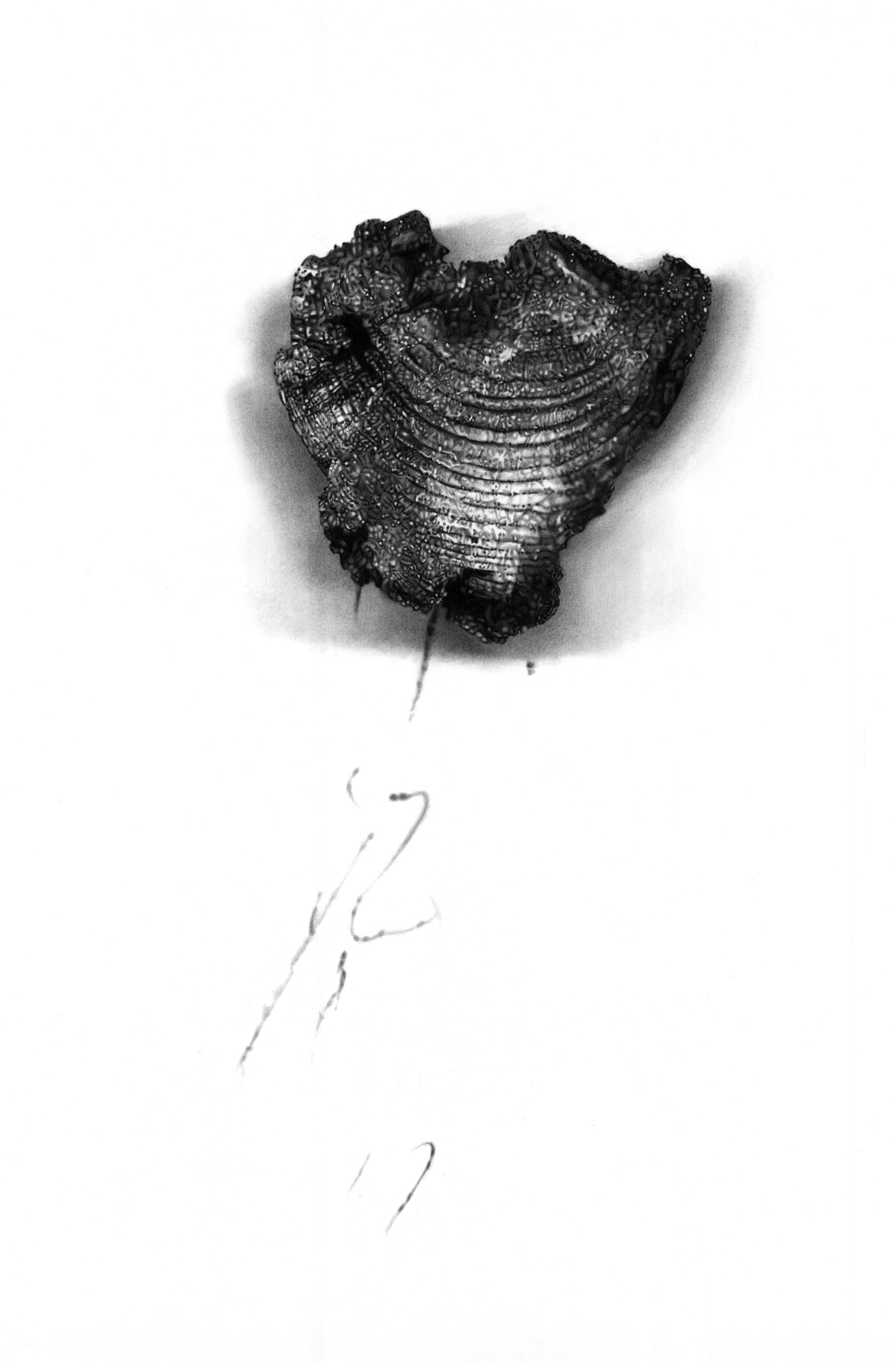 """Charred Alluvium,"" 18 x 12,"" graphite on paper, SOLD"