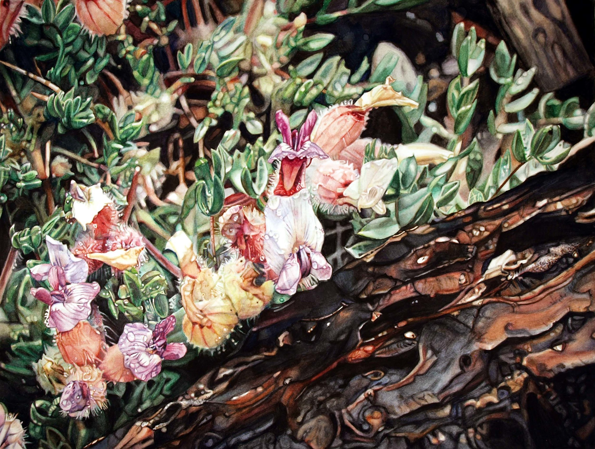 """""""Vetch,"""" 11.5 x 15.5,"""" watercolor on paper, SOLD"""