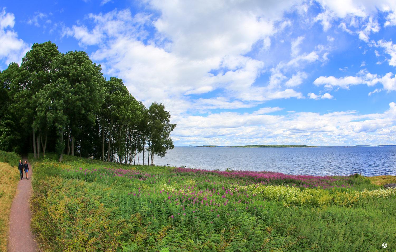 Den siste delen av kyststien går gjennom Fjugstad naturreservat, med Skandinavias største askeskog.