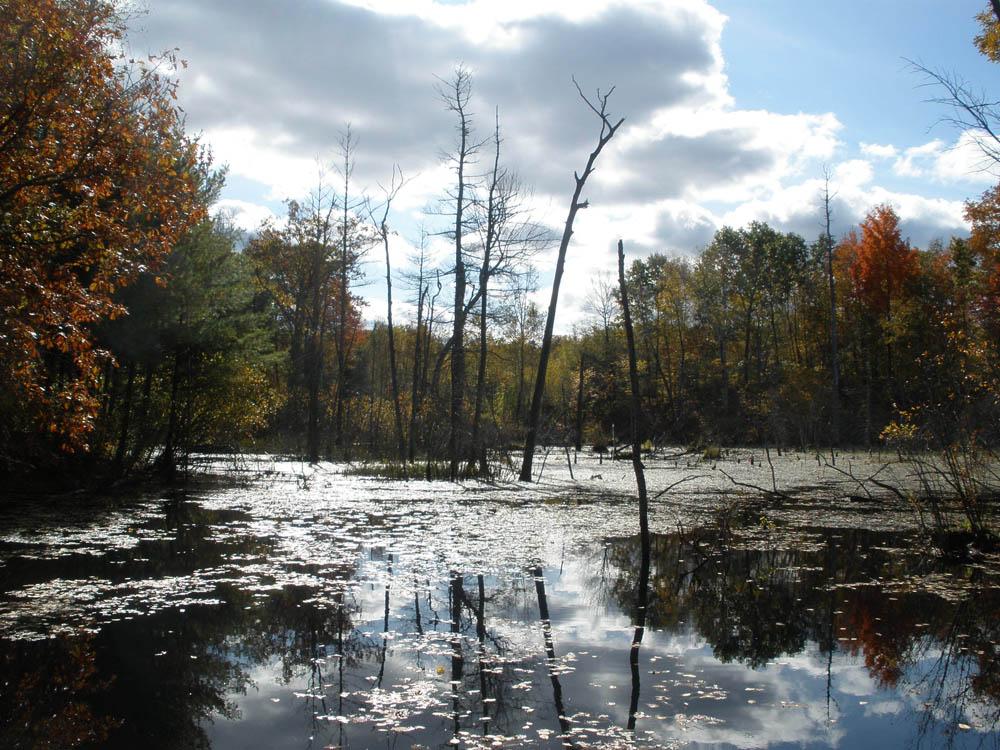 SS-Groton_wetland.jpg