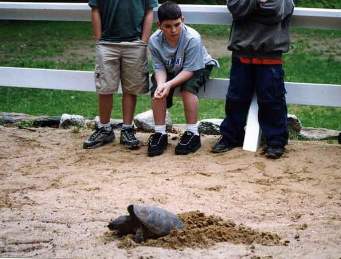 turtle-o.jpg