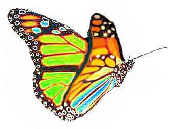 butterfly-LTV-o.jpg