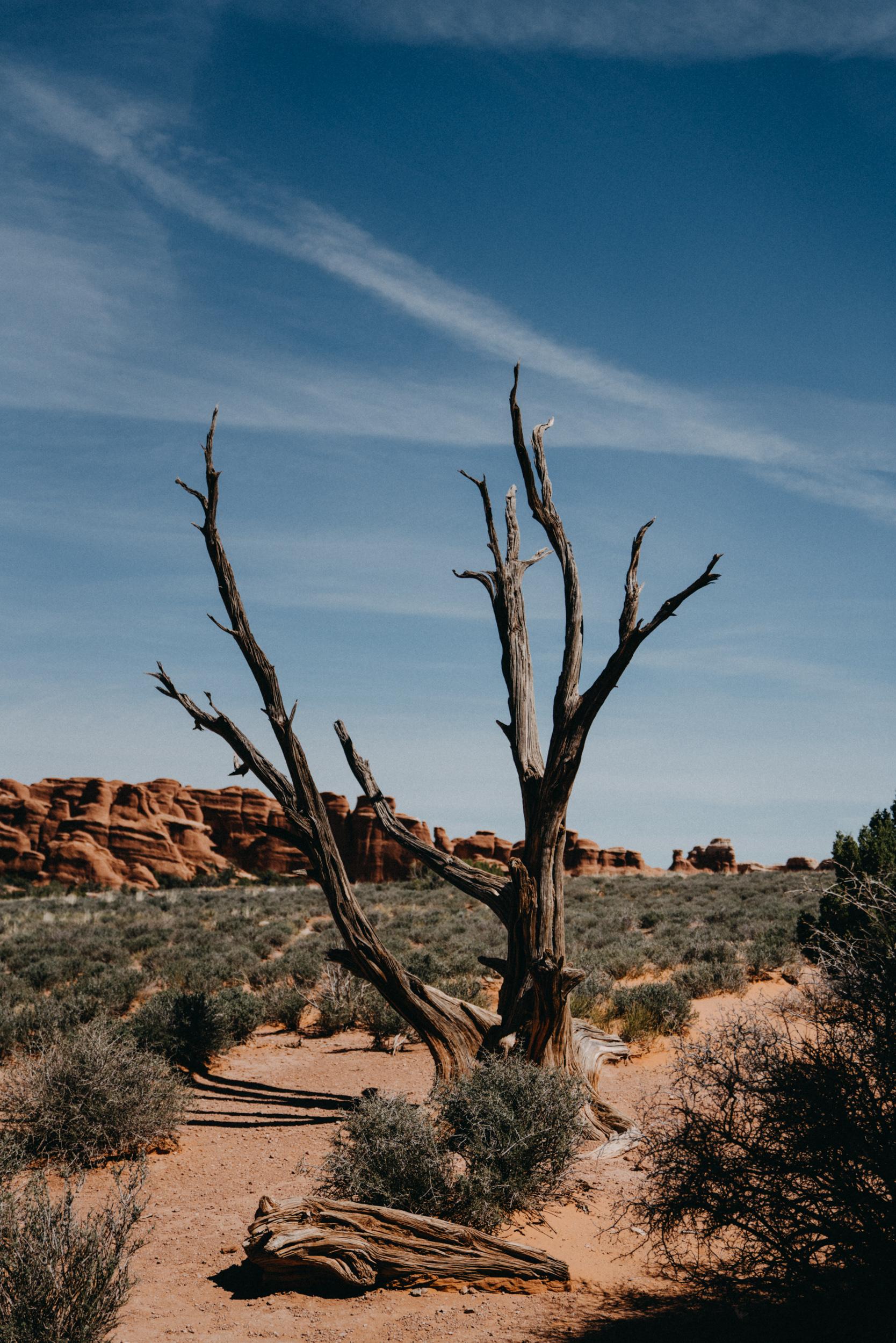 road trip-625.jpg