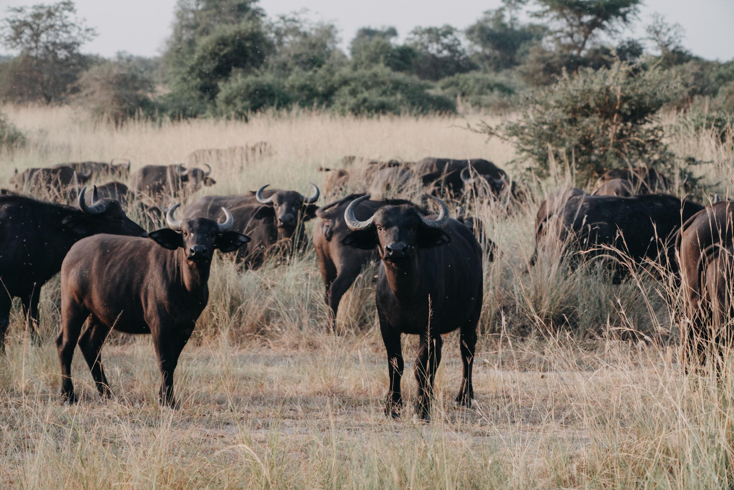 uganda july 2018-283.jpg