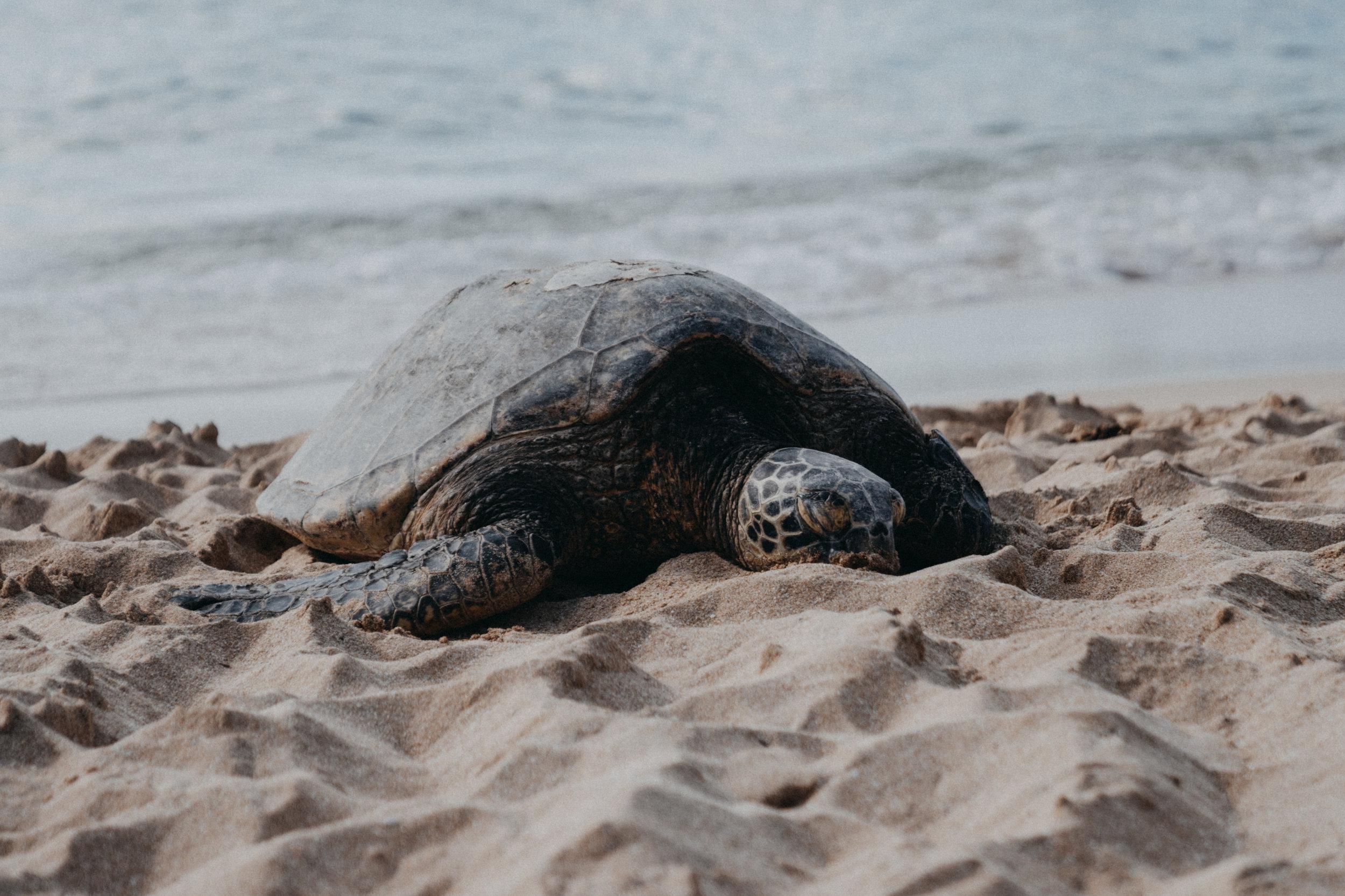hawaii-78.jpg